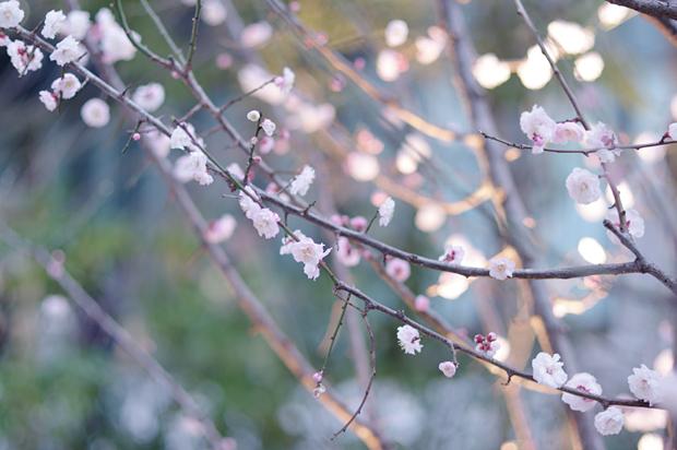 近くにあった梅?桜?