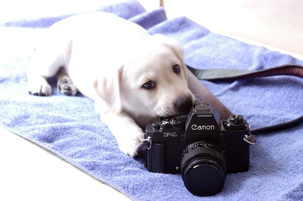 フィルムカメラドック(笑)