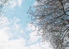 桜が終わった頃