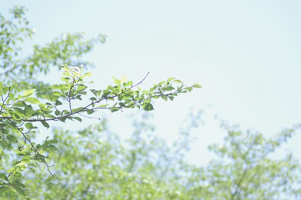 う~ん、空と木だよね♪