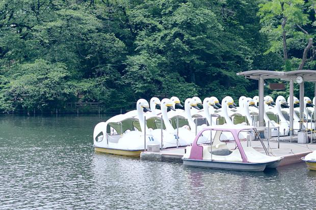井の頭公園池