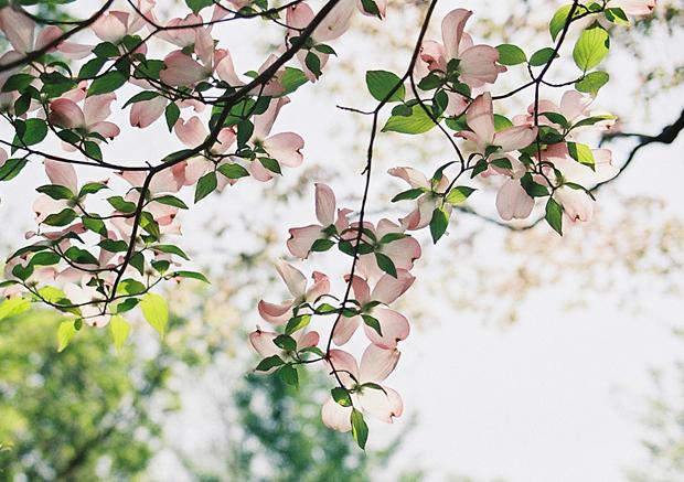 垂れ下がっている花が好き