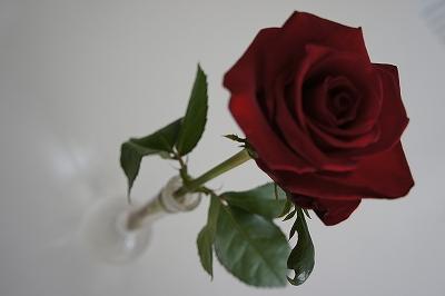 薔薇を入れてくれたMちゃんありがとう