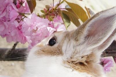 ルナの桜便り2015