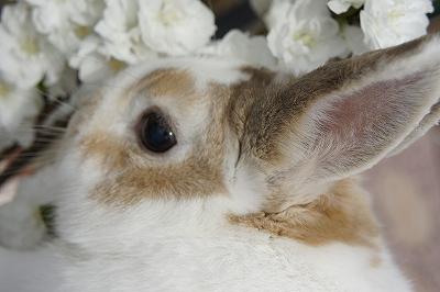 ルナの桜便り2015-4