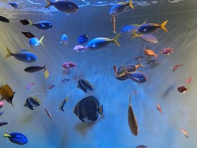 宮島水族館1