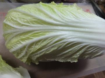 白菜きれいかと思ったら2