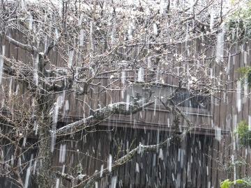 雪みぞれ雷3