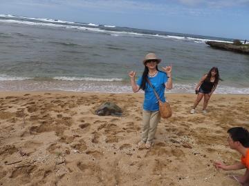 ハワイ観光24