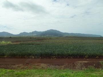 ハワイ観光25