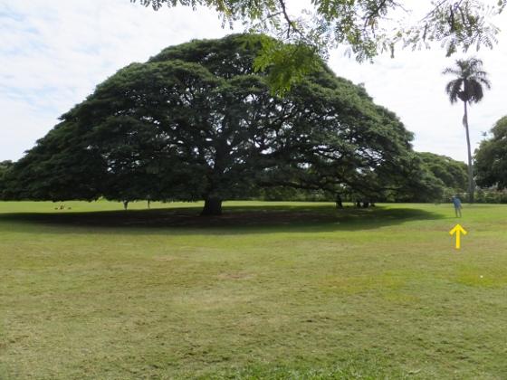 ハワイ観光39