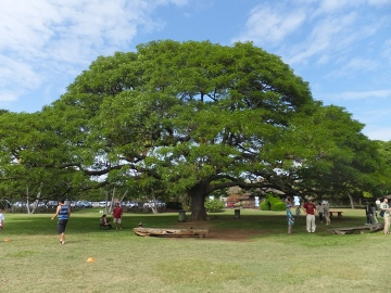 ハワイ観光41