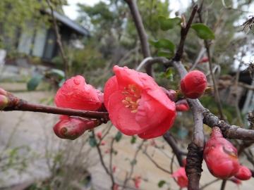 雨に濡れてる花2