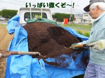 堆肥を芋畑に2