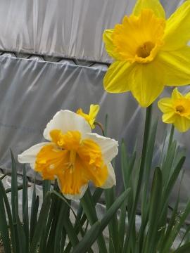 農園の春2