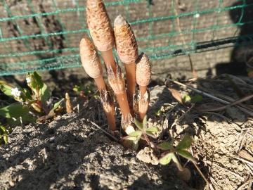 農園の春3