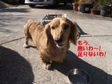 横取り犬2