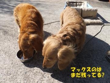 横取り犬3