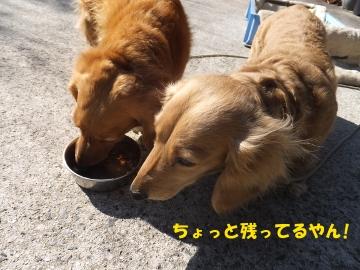 横取り犬4