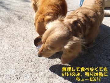 横取り犬5