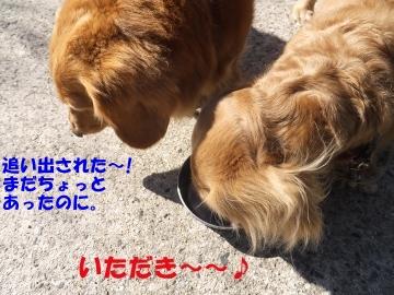 横取り犬6
