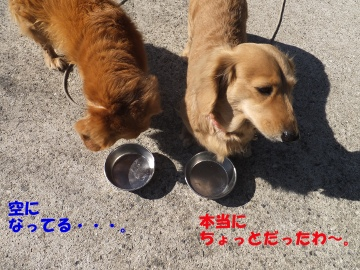 横取り犬7