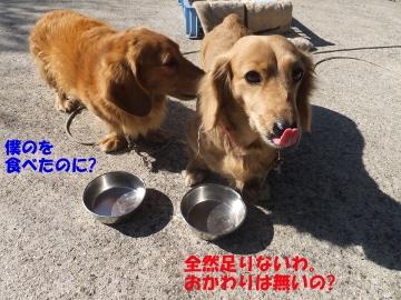 横取り犬8