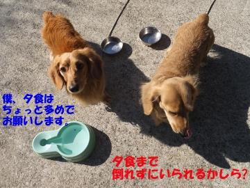 横取り犬9