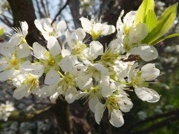2色の花の木3