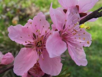 2色の花の木4