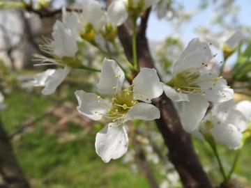 2色の花の木5