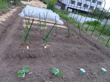 つくねや苗植えいろいろ3