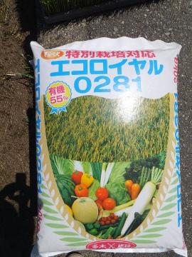 れんげ米田植え27年度6