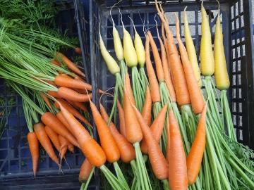 朝市用野菜とキャベツ