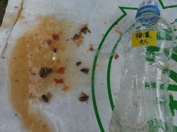 おぼれた虫たち2