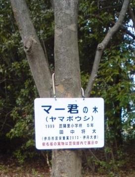 マー君の木