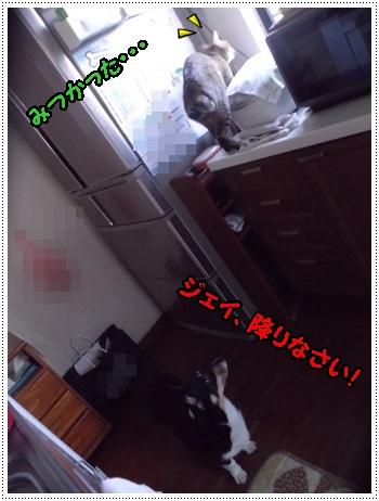 IMGP3748.jpg