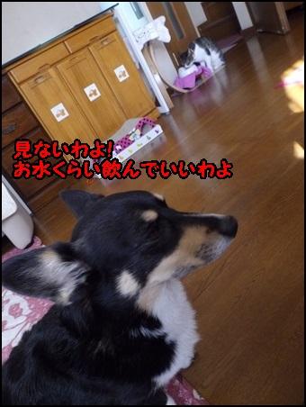IMGP3898.jpg