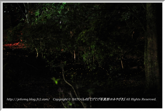 DSC_1261-1.jpg