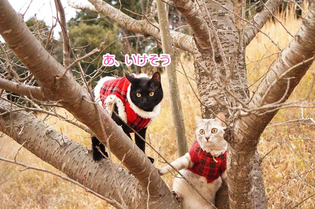 桜の木に登る (1)