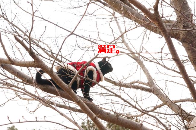 桜の木に登る (5)