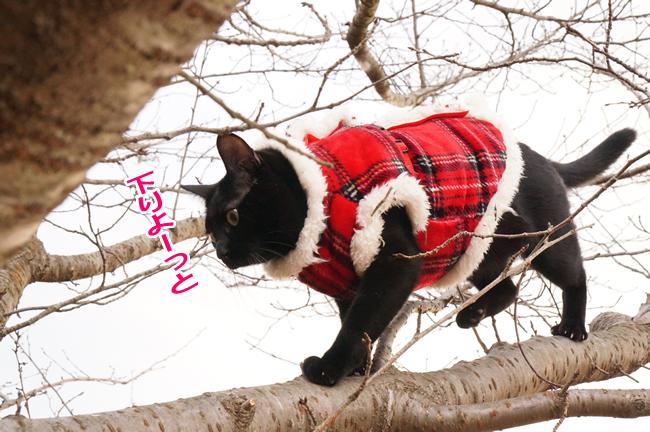 桜の木に登る (6)