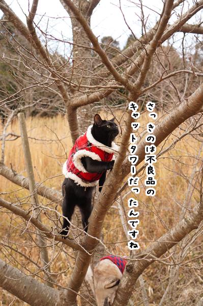 桜の木に登る (2)