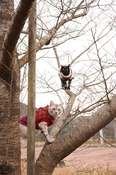 桜の木に登る (7)