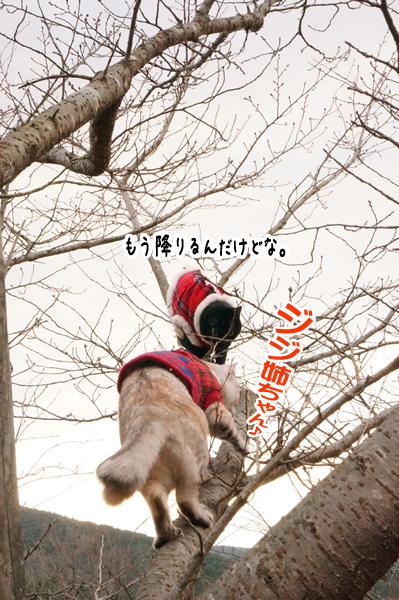 桜の木に登る (8)