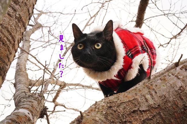 桜の木に登る (9)