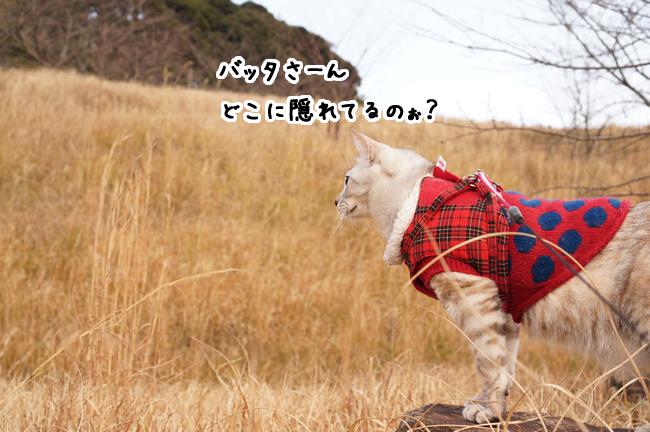 1月30日遊歩道 (2)