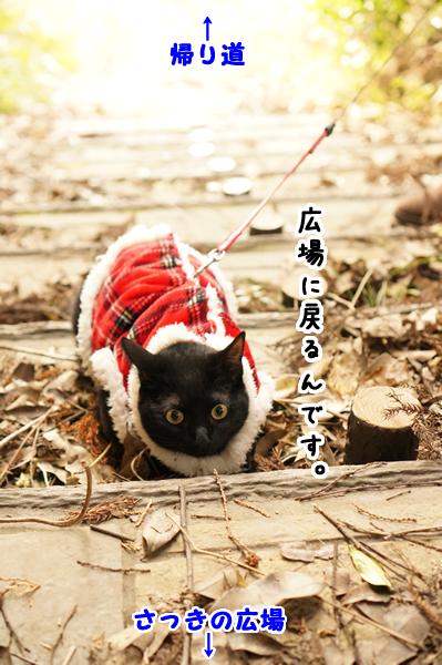 1月30日遊歩道 (3)