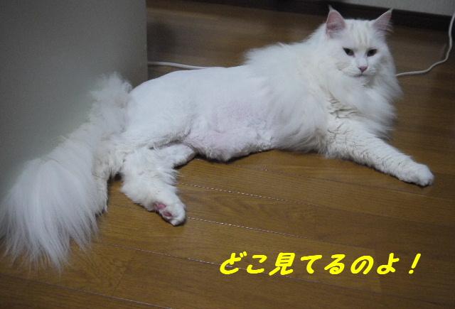 らび子さん紹介