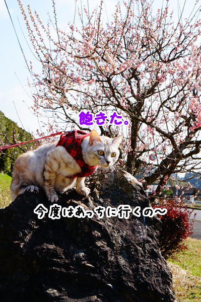 3_20150311113727a29.png
